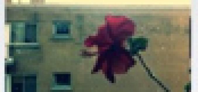 'Cinemagram', la app para iPhone que convierte las fotos en gifs animados