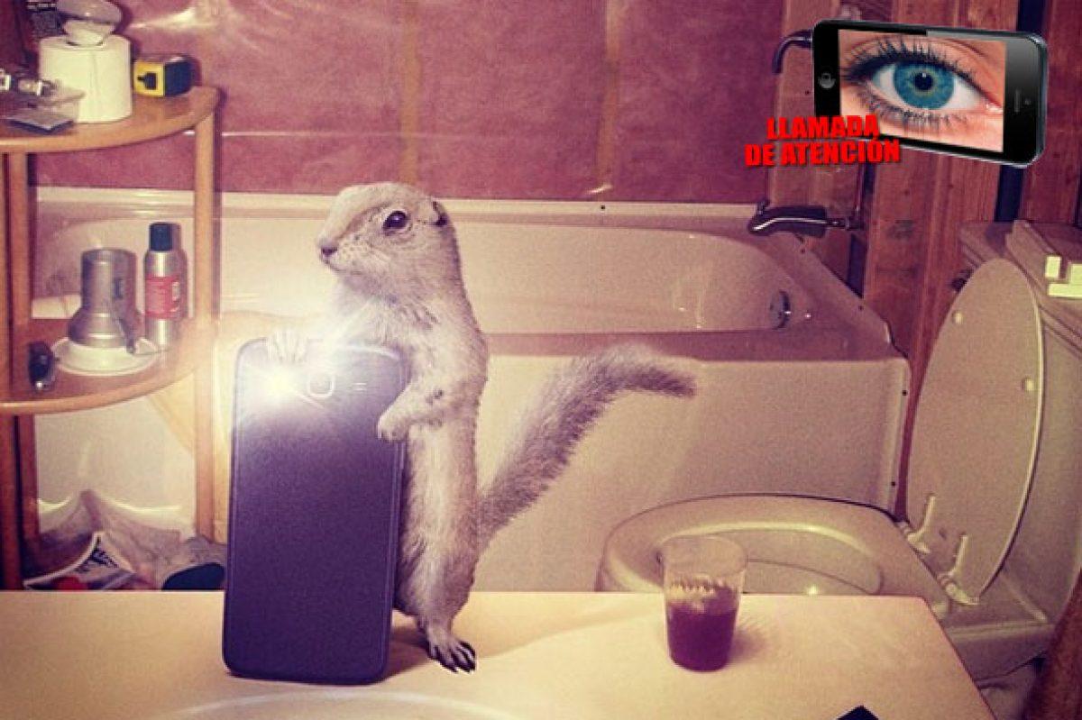 Selfies de animales posando para National Geographic