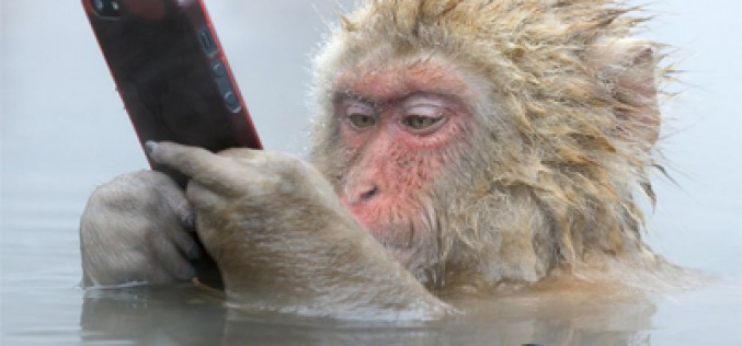 El mono que jugaba con mi móvil