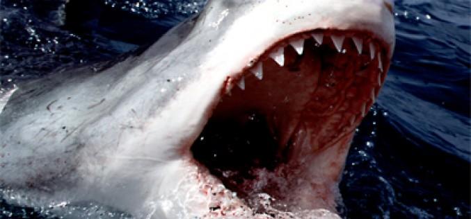 Los selfies son más mortíferos que los tiburones