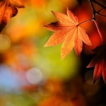 aplicaciones para el otoño