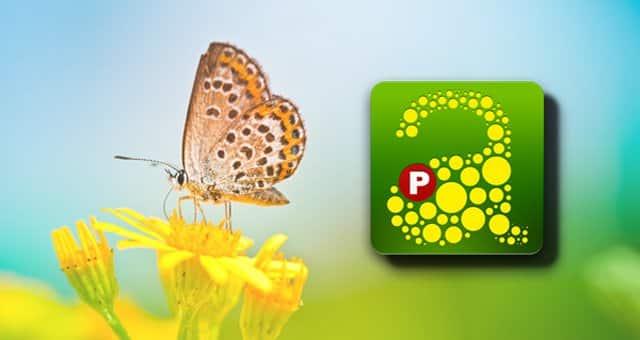 apps-primavera-3
