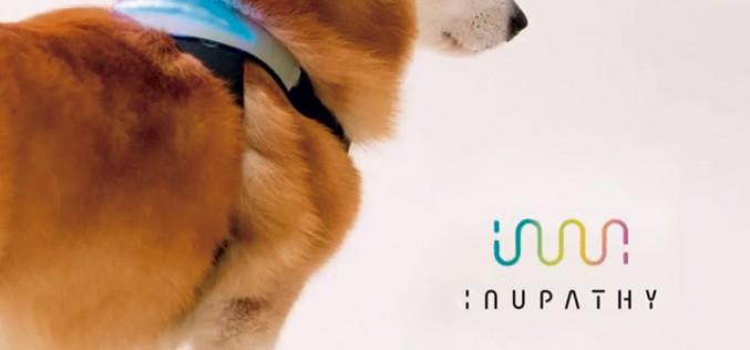 Inupathy: El wearable para tu perro