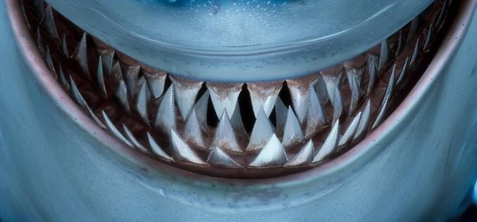 OMV: El pez grande se come al chico