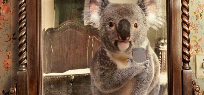 Los selfies más bestias