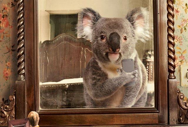 selfies de animales