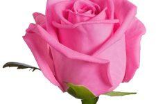 El rosa se apodera de los smartphones de gama alta
