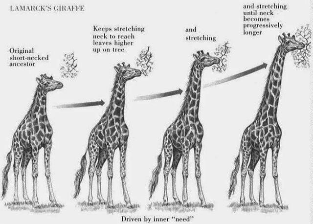 La jirafa de Lamarck