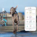 Kippy Vita DOG con V by Vodafone