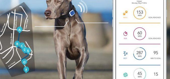 V by Vodafone, para conectar desde el perro hasta el coche