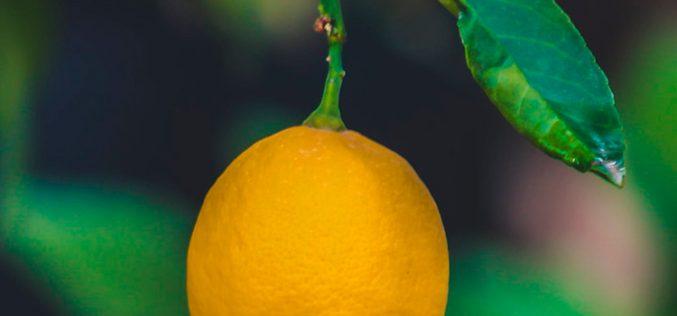 40GB y llamadas ilimitadas por 11,7€/mes: Así palía Lemonvil la crisis del coronavirus