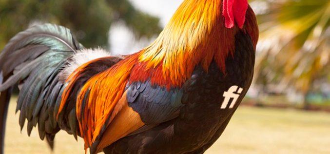 Finetwork, el nuevo gallo que alza la voz en los resultados de portabilidades móviles