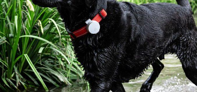 La mascota siempre localizada: Vodafone lanza el accesorio Curve Pet Tracker Clip